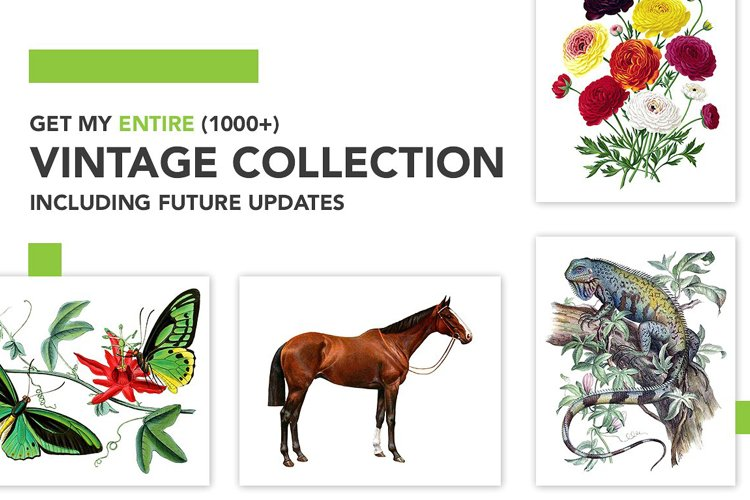 Entire Vintage Collection -Over 1000 Illustrations example image 1