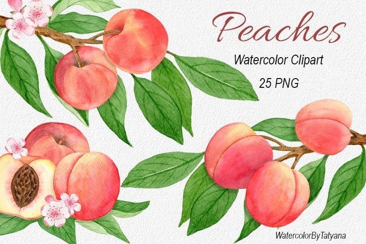 Peach watercolor clip art. Peach tree art. Summer peaches