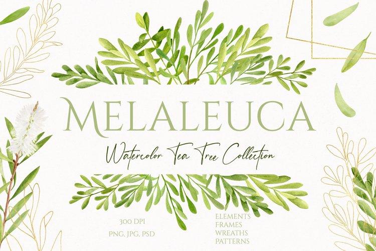 Melaleuca. Watercolor Tea Tree clipart collection