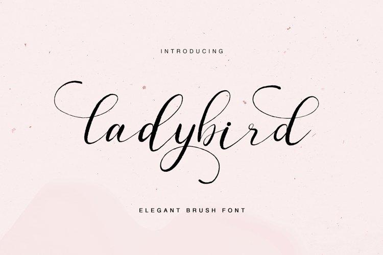 ladybird - elegant brush font example image 1