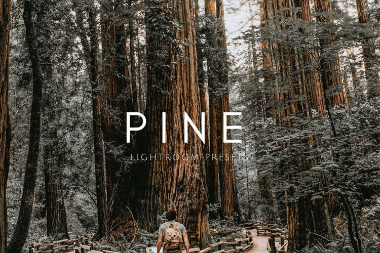 Warm Moody PINE Lightroom Presets example image 1