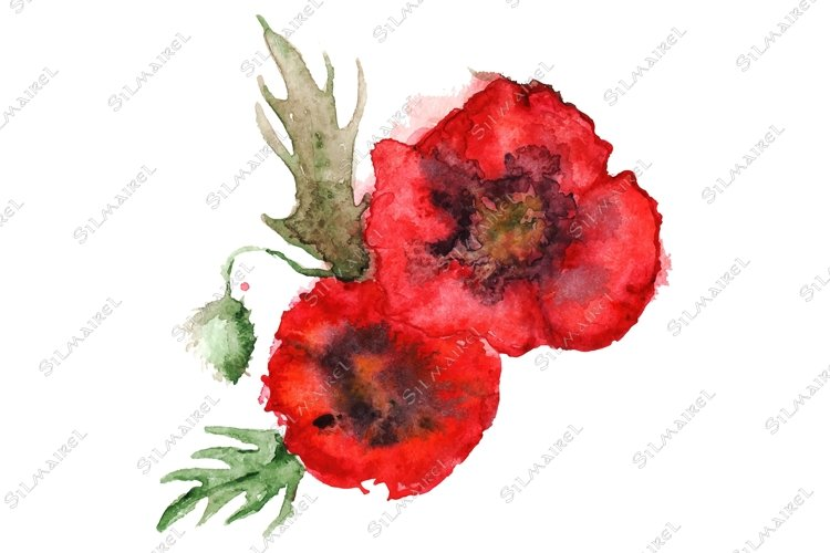 Watercolor red poppies floral composition isolated vector example image 1