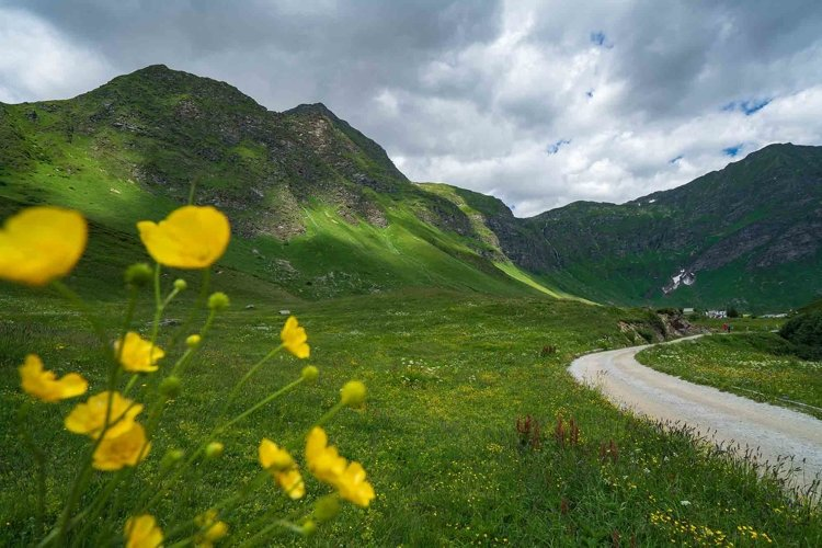 Panoramic view of alps Piora with yellow flowers