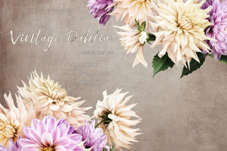 Dahlias clipart. Bouquets of white and purple flowers. example image 1