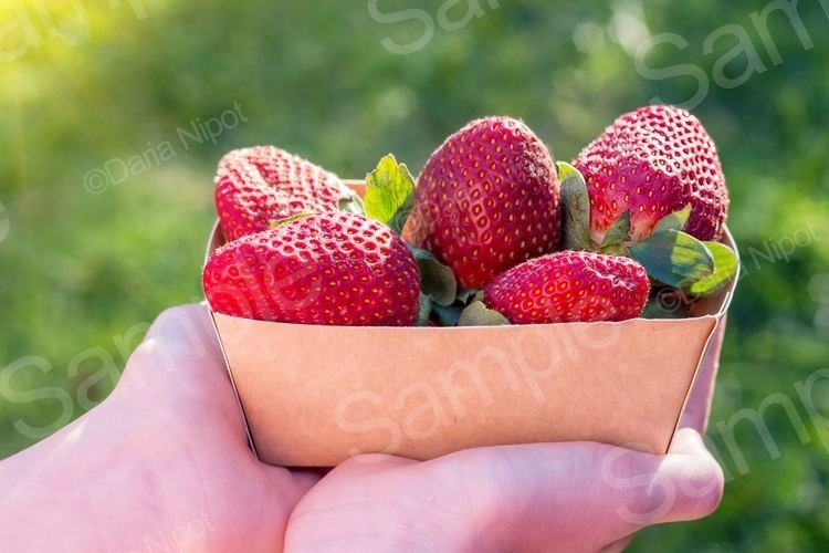 Hands holding recyclable paper box with strawberries