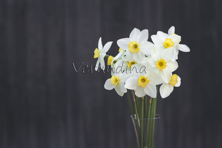 A bouquet of narcissus on a dark background example image 1