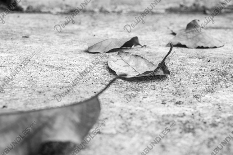 Stock Photo - Withered Leaves in Black and White example image 1