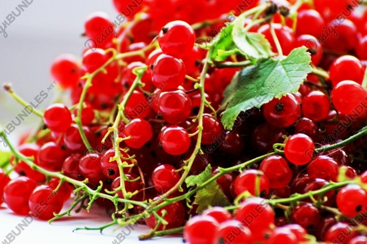 Berries of black and red currants.