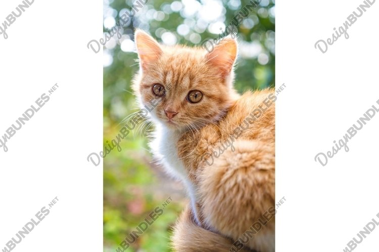Beautiful ginger cat in the early spring garden background example image 1