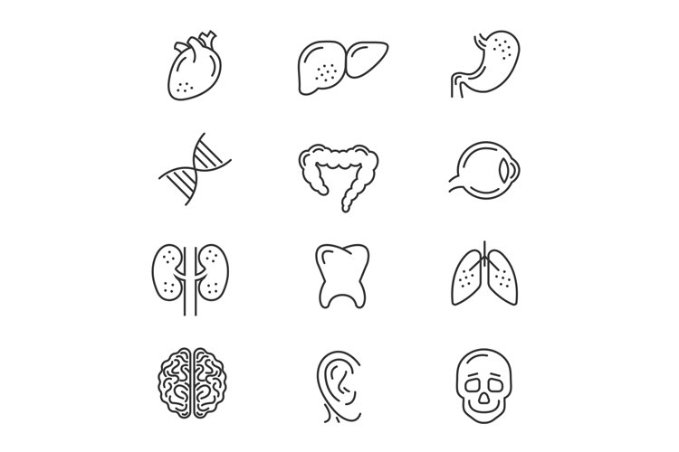 Human organs line icons example image 1