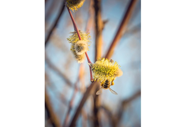 Blooming spring willow branch. Spring easter background example image 1