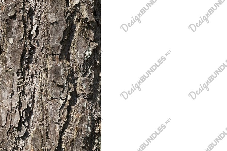 uneven tree bark example image 1