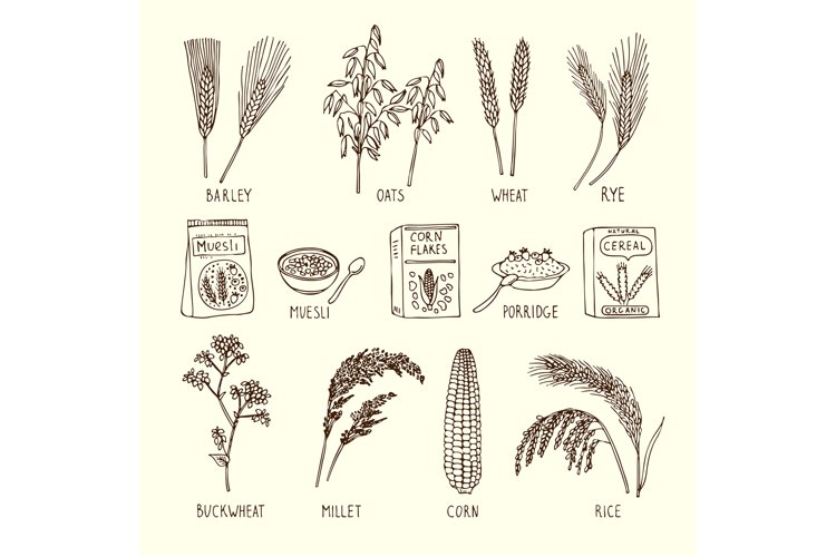 Vector set of different cereals. Muesli, wheat, rice and oth example image 1