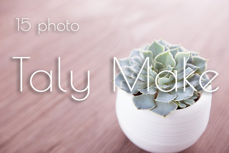 Succulents in pots on a wooden background