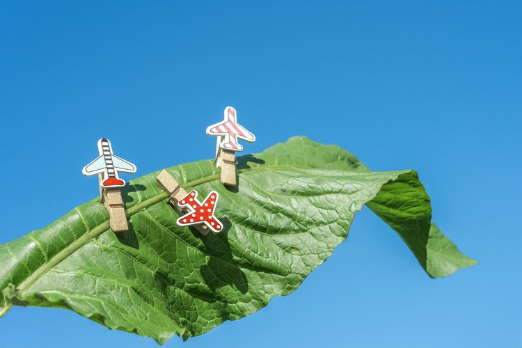 Clothespins for photos in the form of an airplane on a green