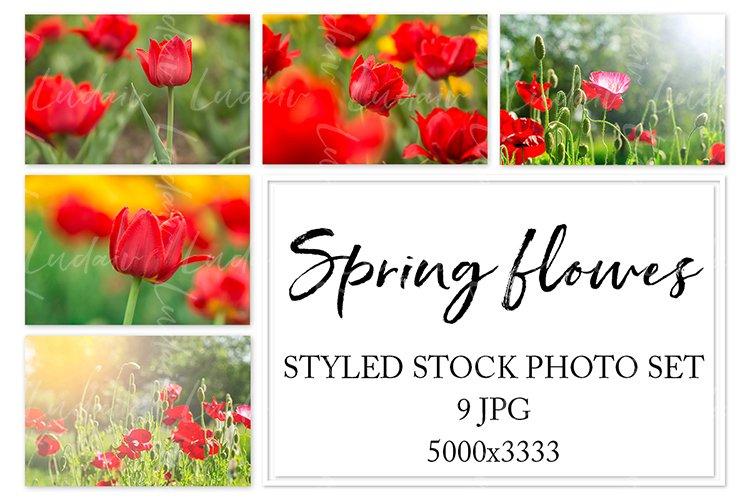 Spring flowers. Styled stock photo set.