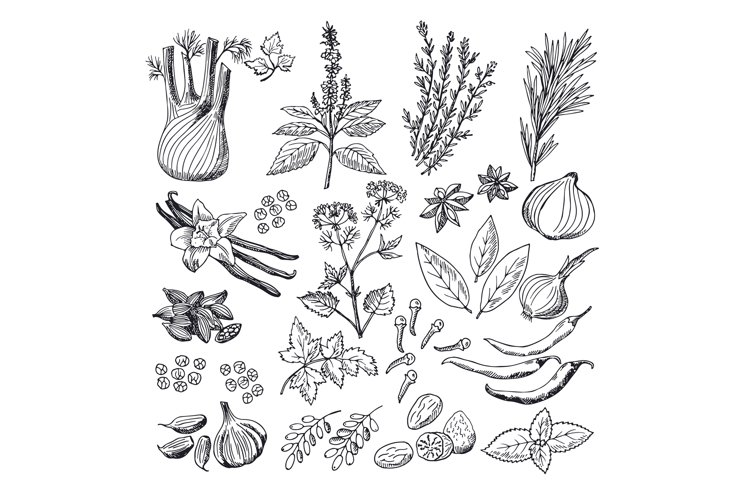 Sketch illustrations of spices and herbs. Vintage hand drawn example image 1
