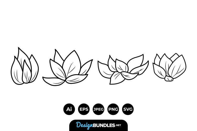 Lotus Flower Illustrations