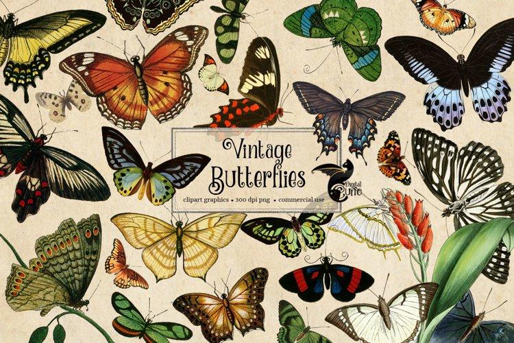 200 Vintage Butterflies Clipart
