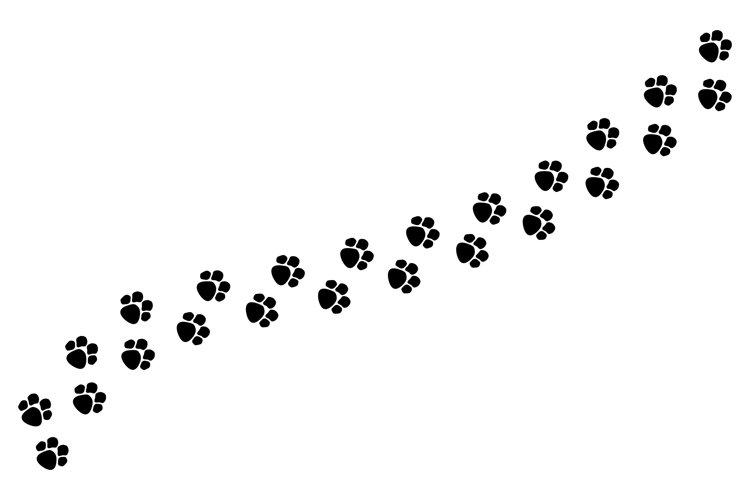 Tracks of dog or cat paws isolated on white background example image 1