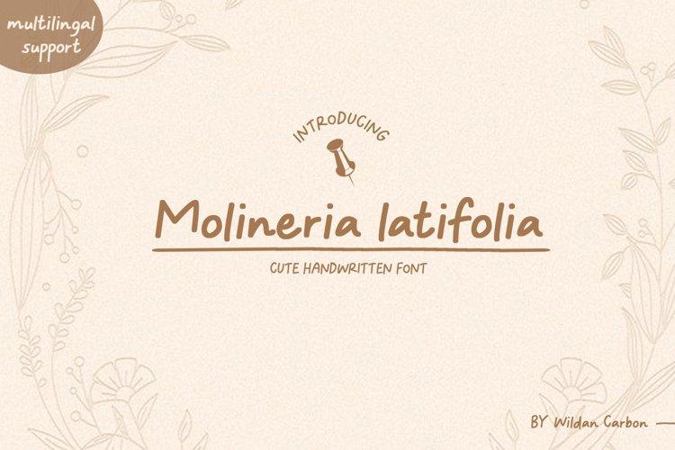 Molineria Latifolia example image 1