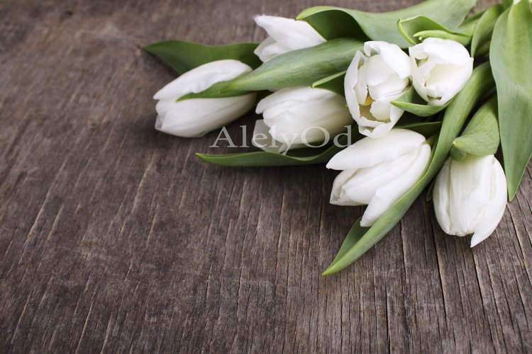 White tulips on a wooden background