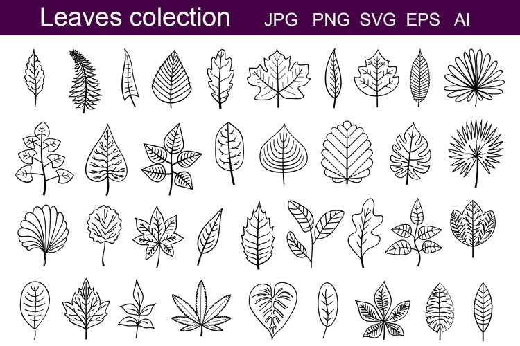 Leaves outline example image 1
