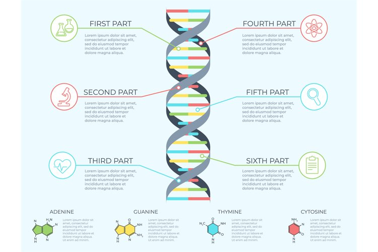 DNA infographic. Genetic spiral, genomic model molecule diag example image 1