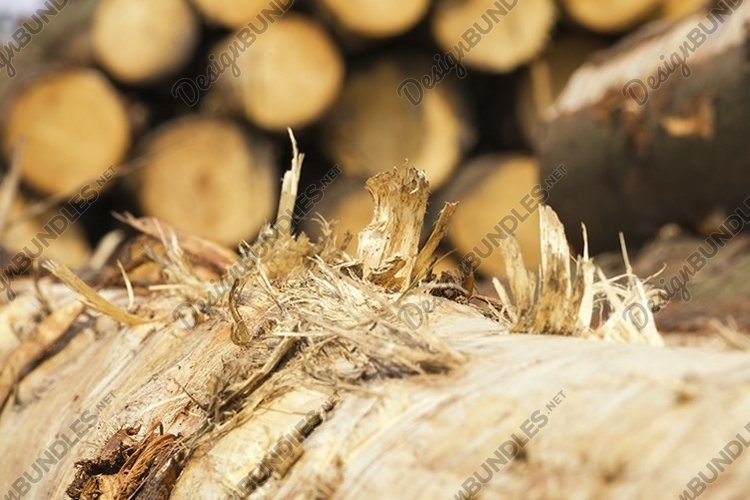 harvesting pine logs, which are used to produce wood example image 1