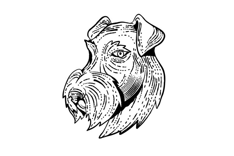 Airedale Terrier Head Etching Black and White example image 1