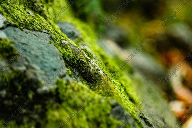 moss in the forest example image 1