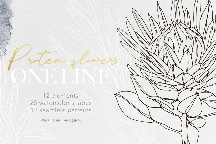 ONE LINE modern art protea flowers