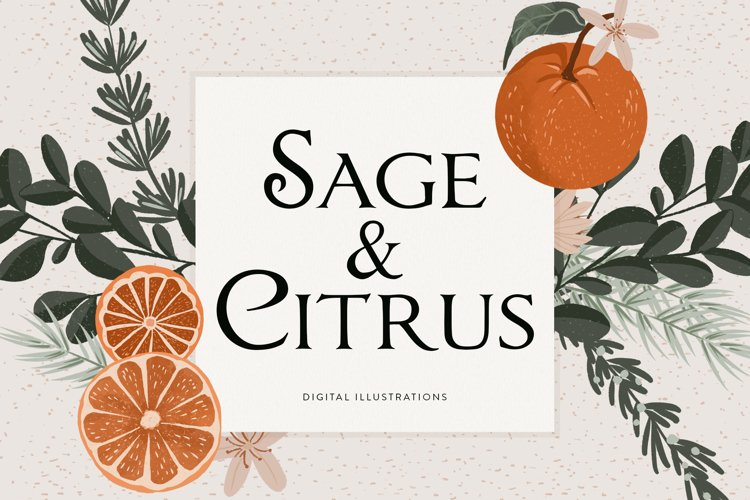 Sage Green Citrus Illustrations example image 1