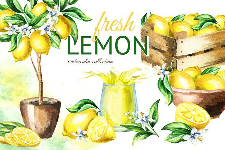 Fresh Lemon. Watercolor collection example image 1