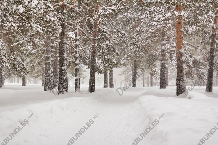 Atmospheric winter landscape in a pine forest.Christmas mood example image 1