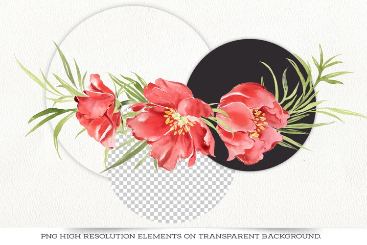Red peonies clipart, red flowers watercolor clipart. example 5