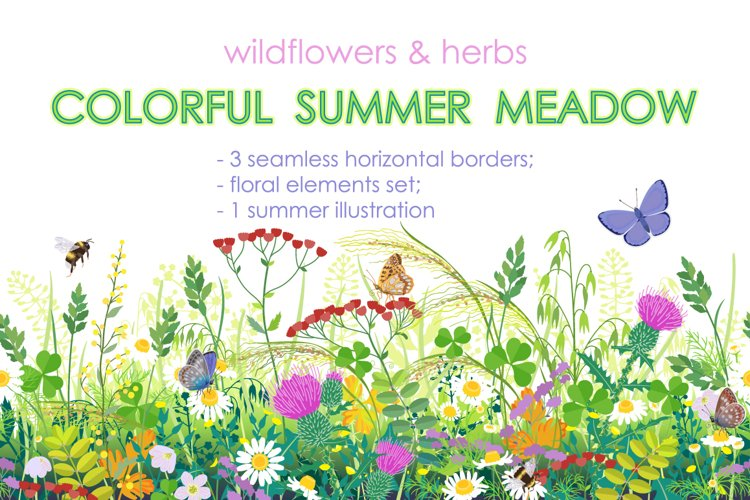 Summer Meadow Plants and Insects