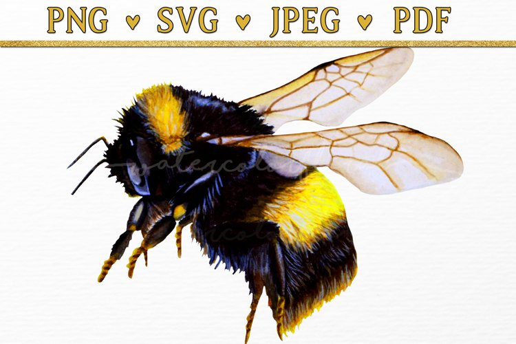 Bumble Bee Clipart Watercolor SVG PNG PDF JPEG example image 1
