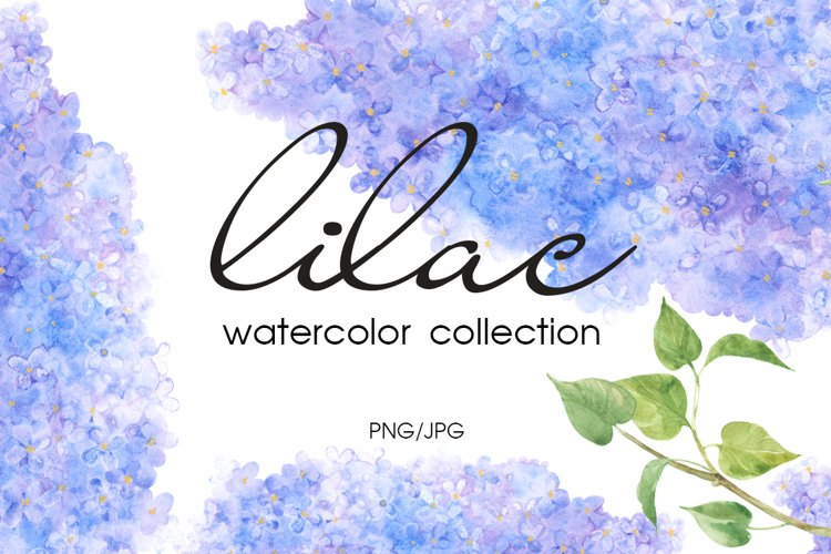 Lilac. Watercolor collection. example image 1