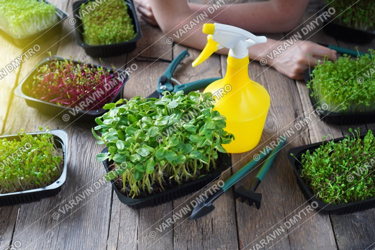 Microgreens Growing Background example image 1