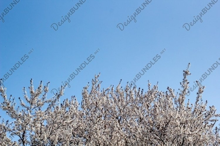Border of Spring apricot blossoms against the blue sky example image 1