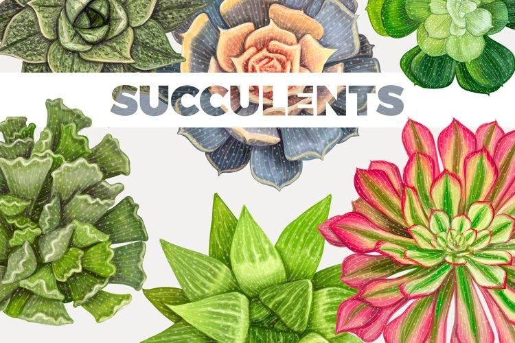 Nice elegant succulent set