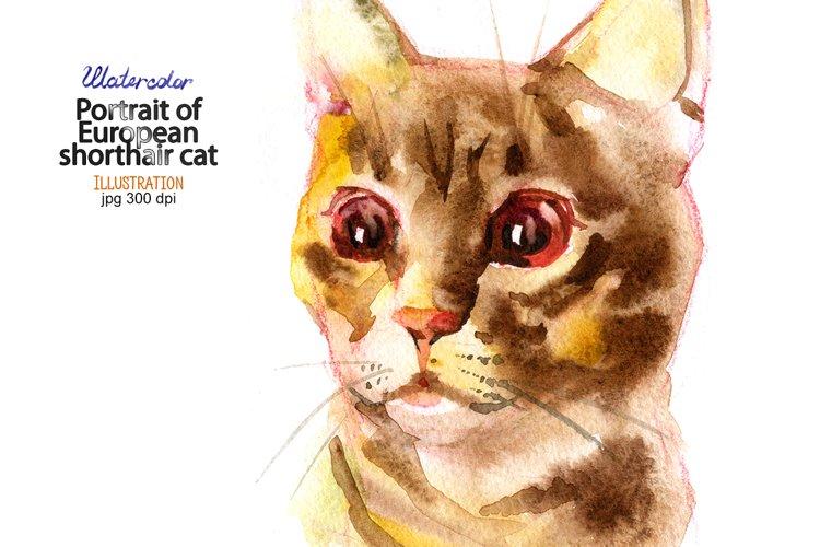 Watercolor European shorthair cat