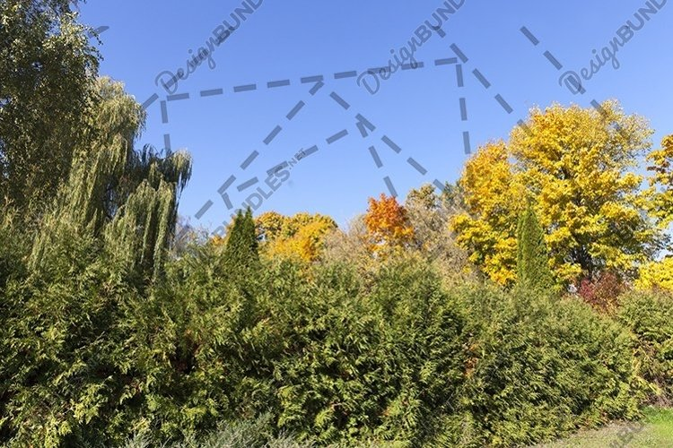 trees in the autumn season example image 1