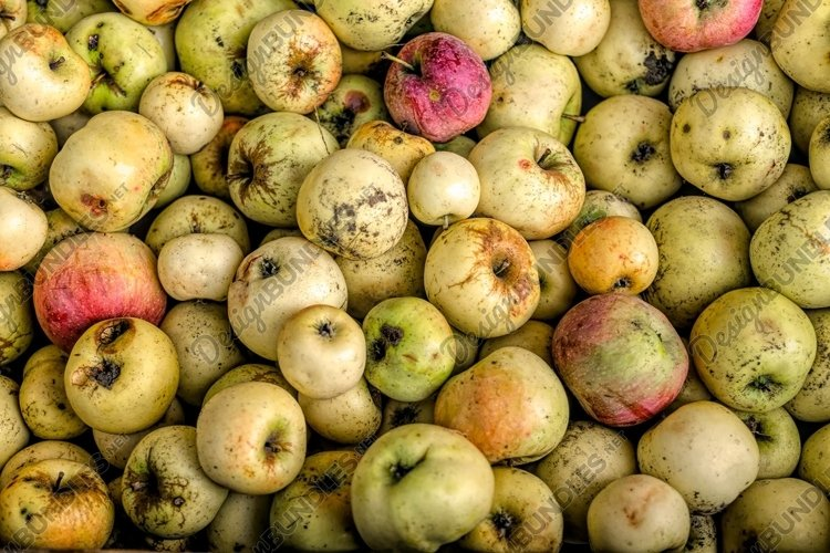 Harvest of autumn apples example image 1