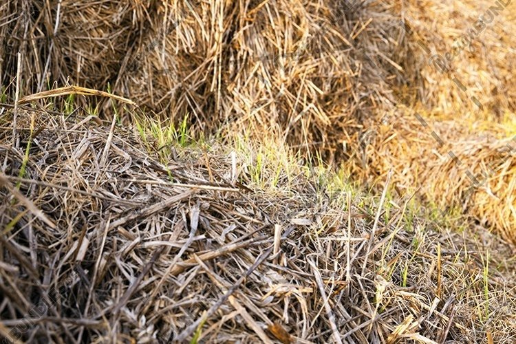 packed straw , cereals example image 1