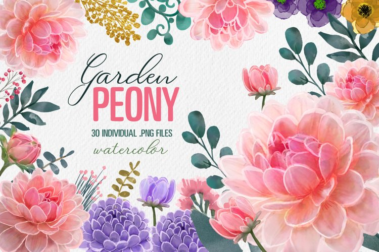 Peony Floral Clip Art set of 30 PNG files pink purple flower