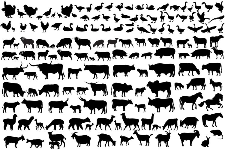 150 farm animals