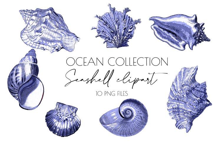 Seashell,seashell clipart,ocean art,beach clipart