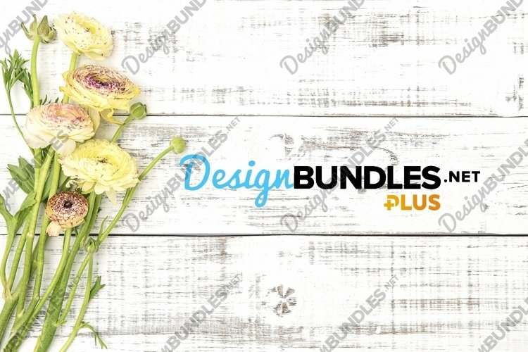 Ranunculus flower on bright wooden background stock photo example image 1